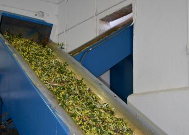 Las almazaras industriales lideran la producción de aceite de oliva