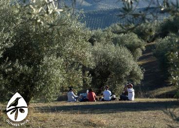 El olivar, el aliado contra el cambio climático