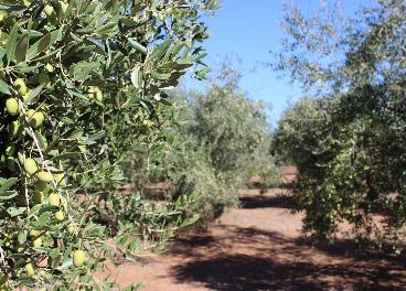 Caen las salidas de aceite de oliva en abril