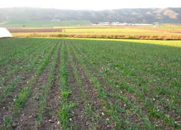 Finca de producción ecológica en Andalucía.