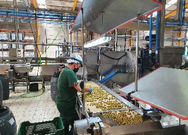 Línea de envasado Manzanilla Olive
