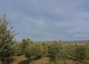 En las hojas y ramas de olivo, los productos más interesantes son los antioxidantes, fundamentalmente hidroxitirosol y oleuropeína.