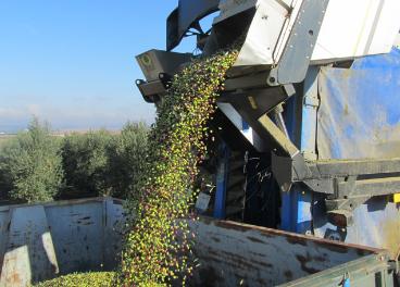 A nivel ecológico, Córdoba es la provincia andaluza que más superficie dedica a este tipo de cultivo.