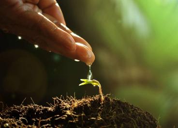 Con esta acción basada en la economía circular se incrementará la calidad de los suelos.