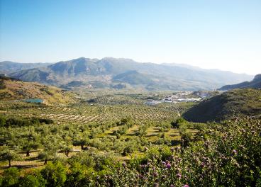 Paisaje de la DO Sierra Mágina.