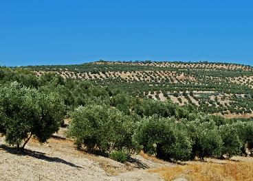 olivares de Baeza