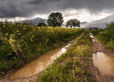 Daños causados por las tormentas en el campo andaluz.