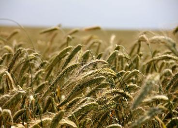 Sembralia acerca al usuario las últimas tecnologías y servicios para la agricultura.