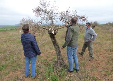 Los técnicos de Asaja valoran la situación de los olivos.