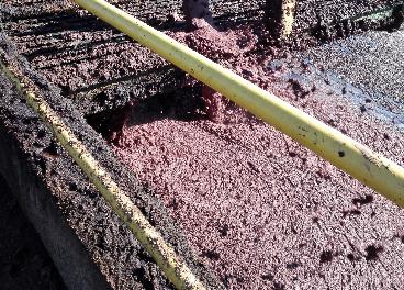 Alpeorujo en la extractora