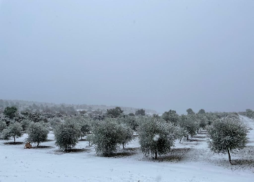 Nieve en el ollivar