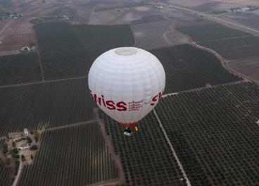 Olivar de Écija desde el aire.